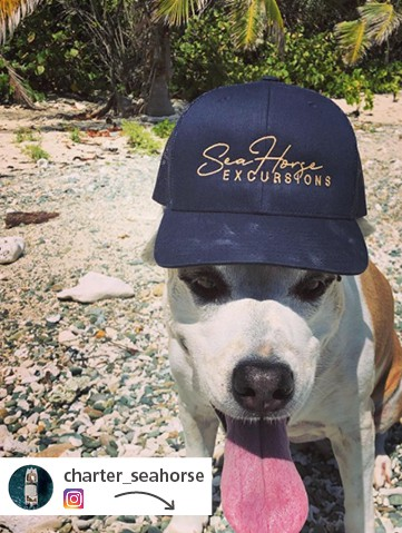 dog on a beach wearing a Sea Horse Excursions branded ball cap