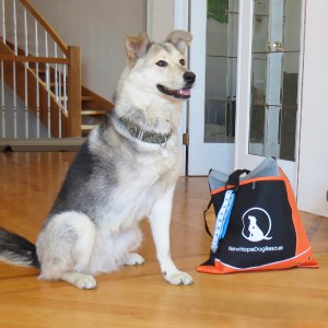 New Hope Dog Rescue personalized tote bags and Bruno, a dog who lost a leg after getting hit by a car.