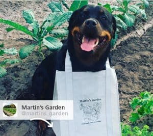 A dog holding a promotional bag.