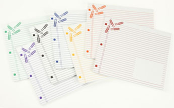 An Array of Notepad/Mouse Pads with Imprinted Paper Clips